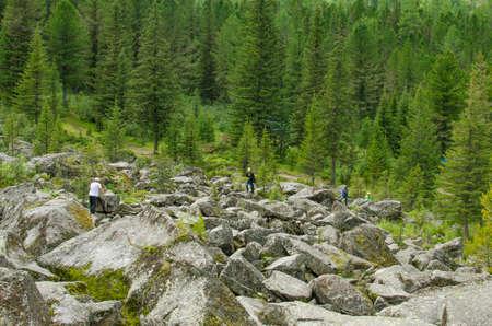 the taiga: landscape tourists on stones among a taiga