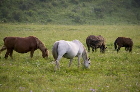 are grazed: landscape of a horse to be grazed on a meadow Stock Photo