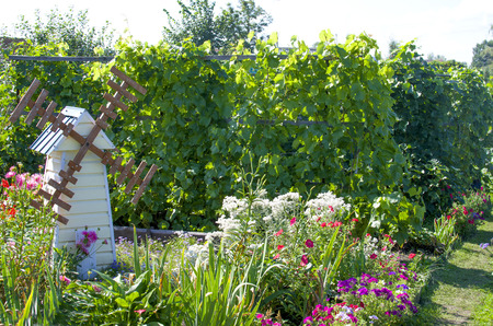 kitchen garden: garden a kitchen garden with flowers and bushes of grapes Stock Photo