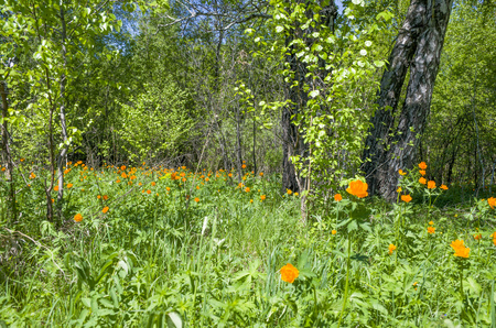 Beautiful landscape of green wood with orange flowers in a green grass Banco de Imagens