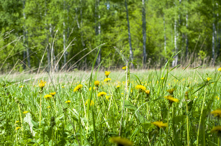 Beautiful landscape with green grass with yellow flowers in a green grass Banco de Imagens
