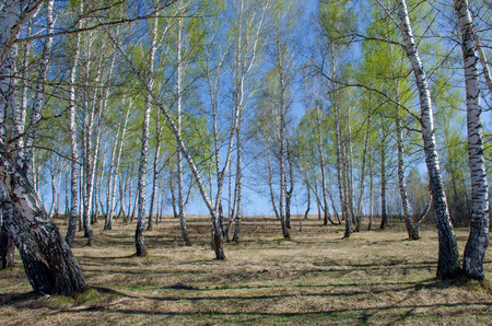 Spring in Sibir in May