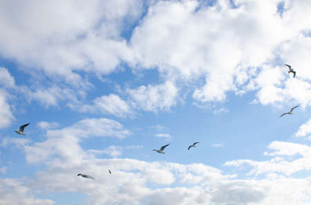 landscape of a seagull bird against the background of a blue sky with clouds 免版税图像