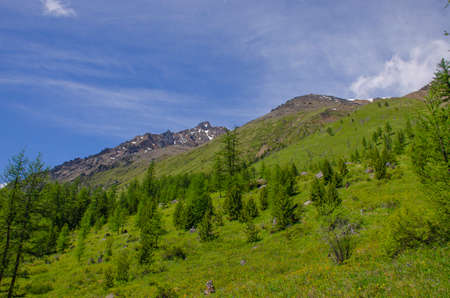 beautiful landscape of Mount Altai and forest Russia