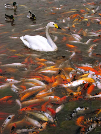 fishy: Fishy lake Stock Photo
