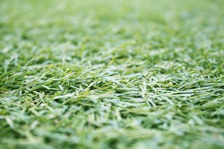 pasto sintetico: Fondo artificial de hierba sintética,