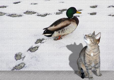 graphity: Duck and cat Stock Photo