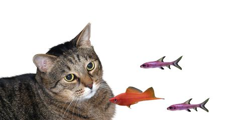 Cat and three fishes Stock Photo - 3828502