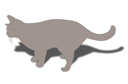grey cat: Drawn grey cat