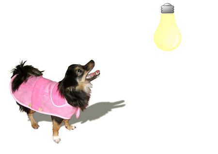 The little black dog barks at a bulb photo