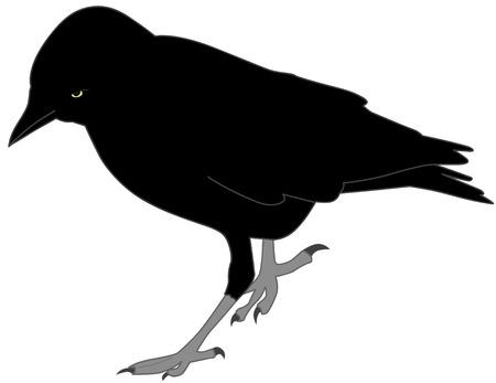 blackbird: czarny kruk Ilustracja