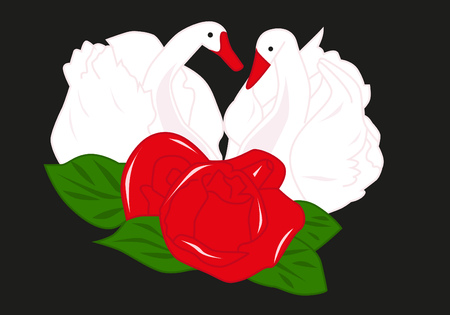 Two white swans and red rose Vector