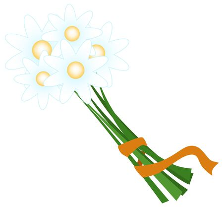 bouquet of daisies tied with a ribbon Stock Vector - 13957607
