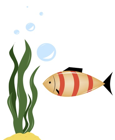 green algae: Small fish next to the green algae