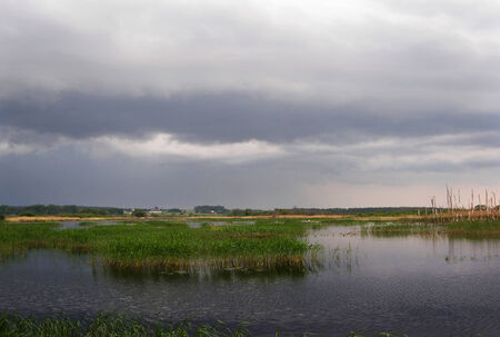 Lake overgrown with sedge, with dark clouds before the storm