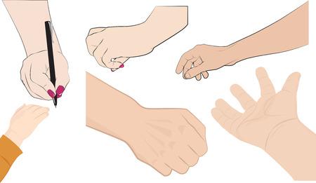 takes: Set of different hands, men, women and children, vector illustration