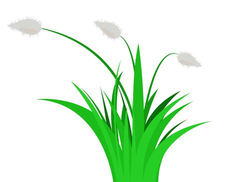 flowers fluffy: Plant with fluffy flowers in green grass. Vector illustration