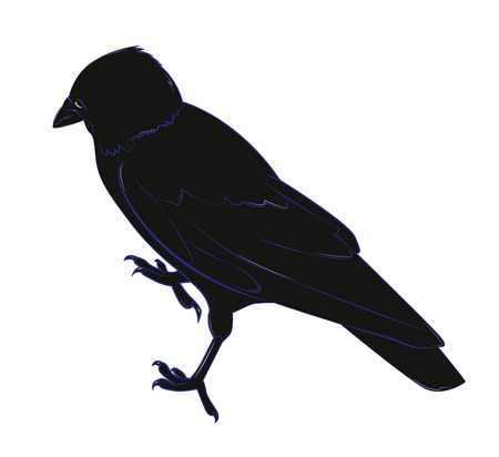 crow: Black crow with yellow eye. Vector illustration