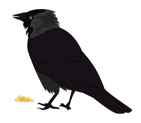 jackdaw: tousled jackdaw eats bread. Cartoon vector illustration