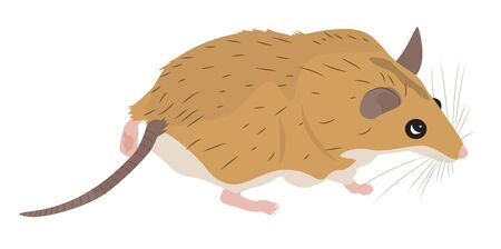 spiny: Cartoon spiny mouse curious looks. Vector illustration Illustration
