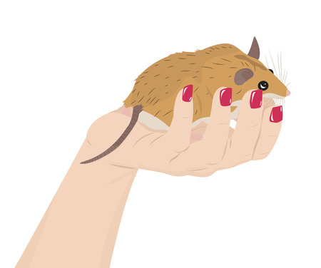 spiny: Cartoon spiny mouse in a female hand. Cute pet. Vector illustration Illustration