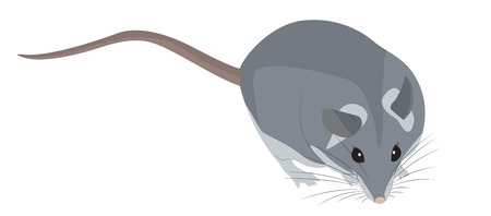 plump: Cute plump cartoon gray mouse. Vector illustration