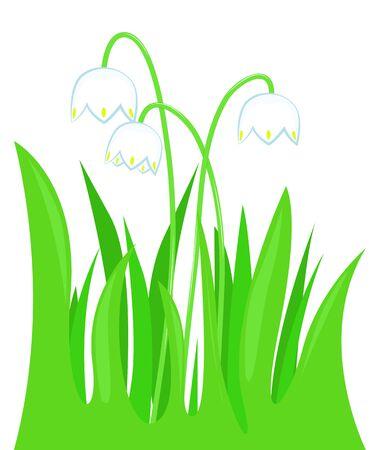 snowdrops: Three snowdrops in the green grass. illustration