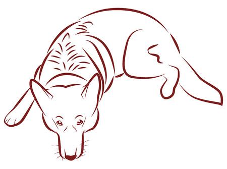 german shepherd: The contours of the German Shepherd. Dog lies and devotedly looks.