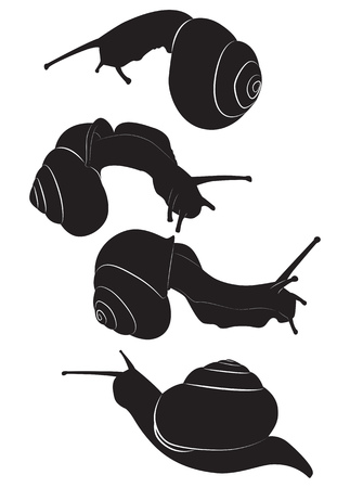 A set of silhouettes edible snail.  illustration Illustration
