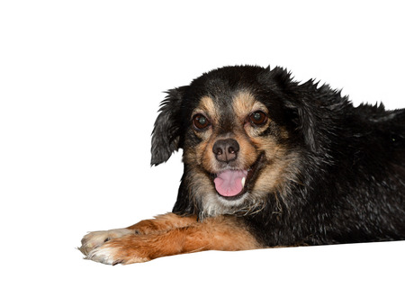 Little happy dog is wet after washing Stock Photo