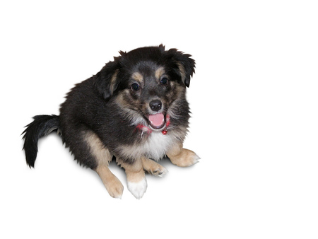 Beautiful little puppy of a mongrel on a white background
