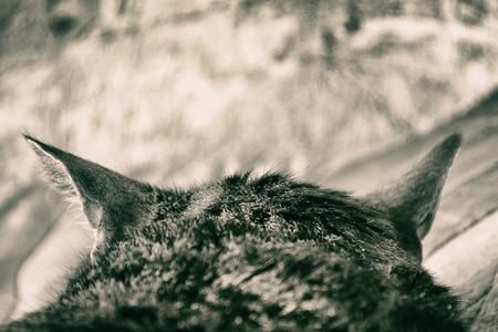 Cat head, rear view. Ears close up. Photo toned, retro style Stock Photo