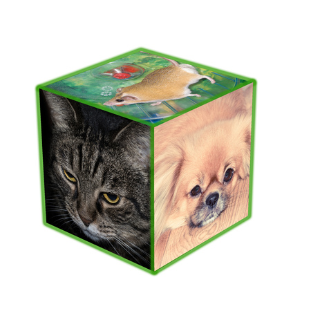 Photos of pets on a cube on a white background Stock Photo