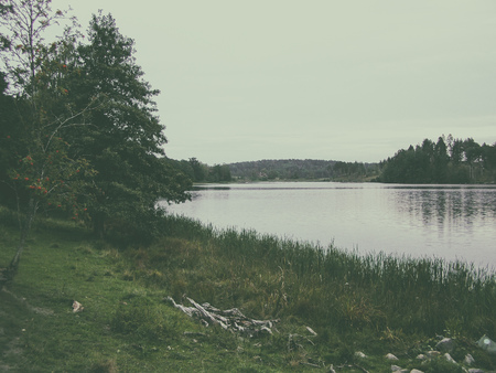 The shore of the lake overgrown with cattail. Photo toned in retro style, soft green color Stock Photo