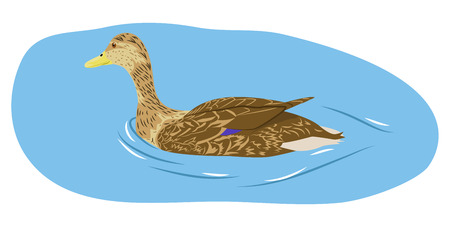 Female duck swims on water. Cartoon vector illustration 向量圖像