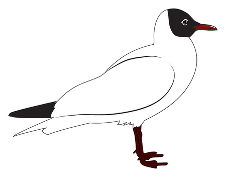 Black headed gull in profile. Vector illustration