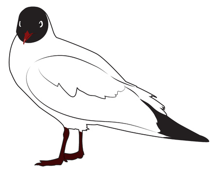 Black headed gull is standing sideways turning its head. Vector illustration