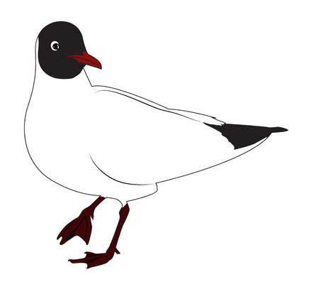Black headed gull is standing. One leg raised. Vector illustration