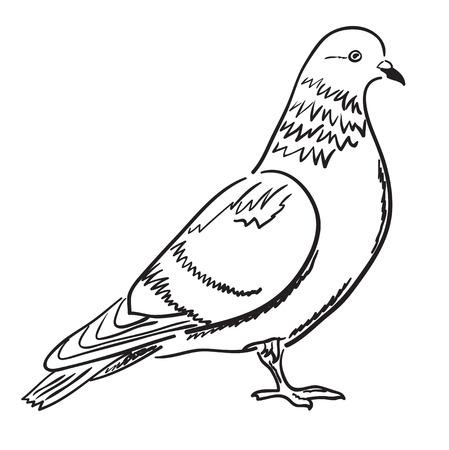 Contorno di piccione di profilo. Illustrazione vettoriale, schizzo, pagina da colorare. Vettoriali