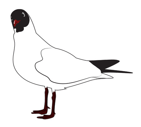 Black headed gull standing sideways, looks surprised turning his head. Vector illustration  イラスト・ベクター素材