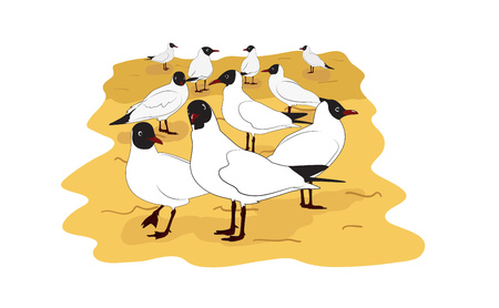 Colony of black headed gulls on the sand. Cartoon vector illustration Ilustração