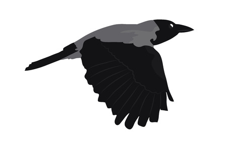 Hooded crow in flight. Cartoon vector illustration.