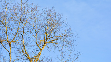 Tree without leaves against the blue sky. Early spring