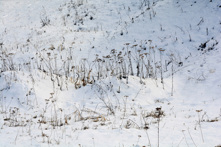 Winter landscape. Glade with dry grass covered with snow Imagens
