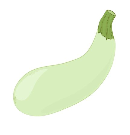 Vegetable, green marrow squash. Cartoon vector illustration.