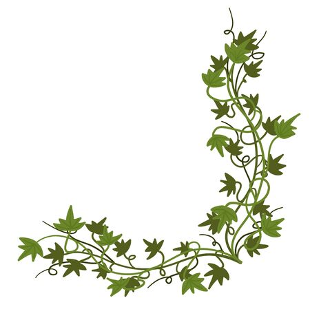 Decorative corner. Green creeping ivy, vector illustration