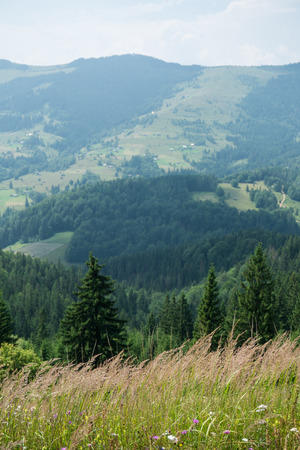 forested: Blooming meadow on a background of forested mountains Stock Photo