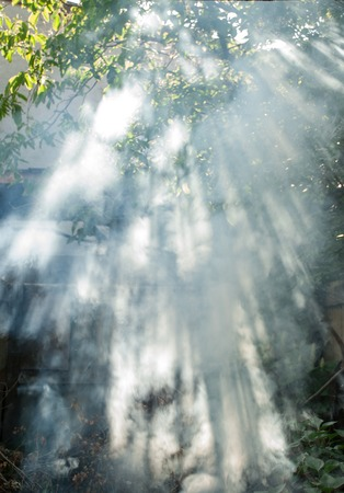 penetrate: Suns rays penetrate through the trees and smoke