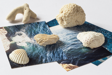 Shells and pictures with the images of the sea on white surface Stock Photo