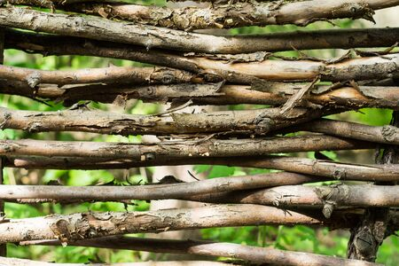 intertwined: Fragment of a hedge of twisted branches Stock Photo